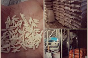 برنج حسن سرایی